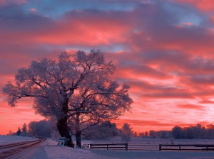 winter_sunset_sky_snow_tree_color_nature_hd-wallpaper-1310863